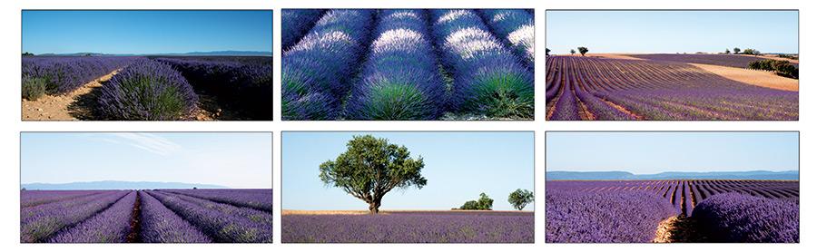 Im Herzen der Haute-Provence wird Lavendel, Olivenöl und Mandeln angebaut.